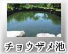チョウザメ池